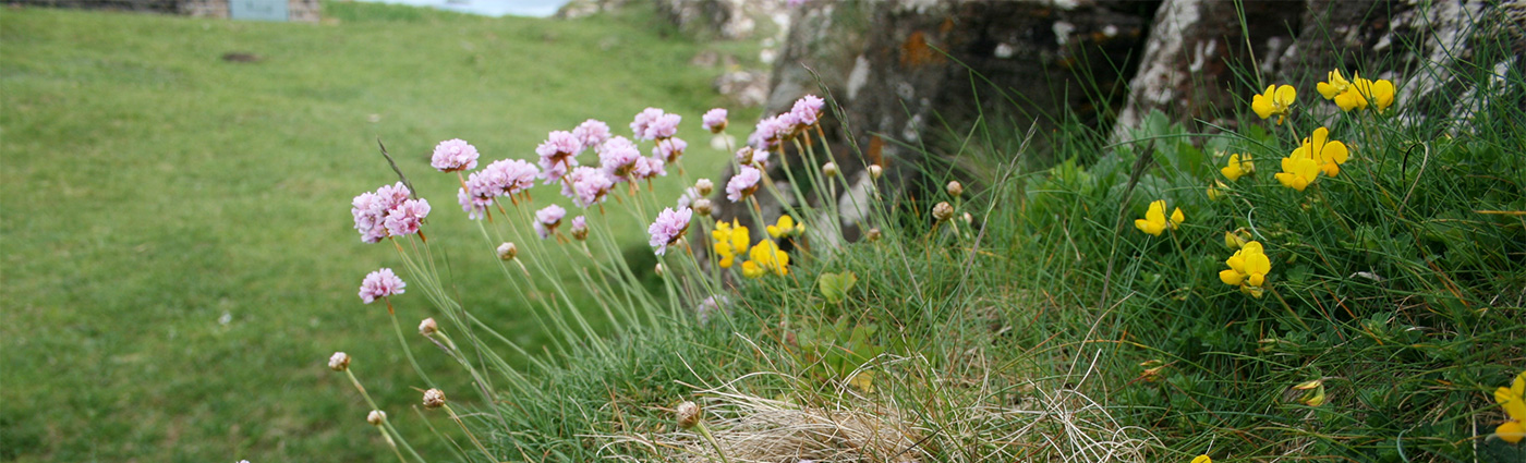 Conservation at Drimnin Estate