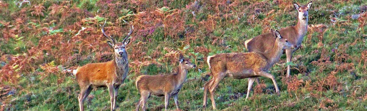 A Family of Red Deer