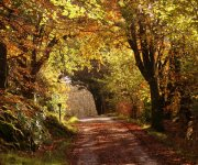Autumn Glory. Drimnin may not have 'The Dark Hedges' made famous by Game of Thrones, but we have some wonderful trees including ancient Caledonian oak and hazel woods & at this time of year they looks just stunning in all their autumn glory.