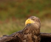 BBC4 documentary Turtle, Eagle, Cheetah: A Slow Odyssey filmed in Drimnin